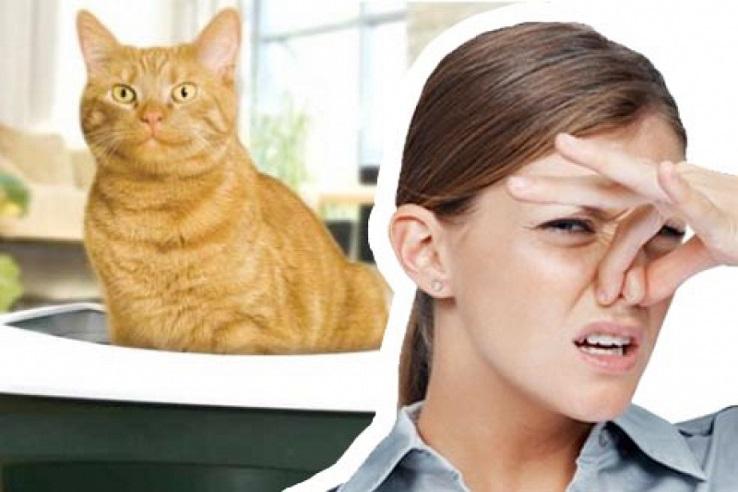 Запах мочи домашних животных в Дзержинске