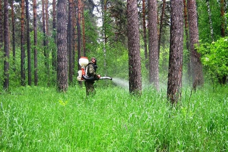 Обработка от клещей лесных массивов в Дзержинске
